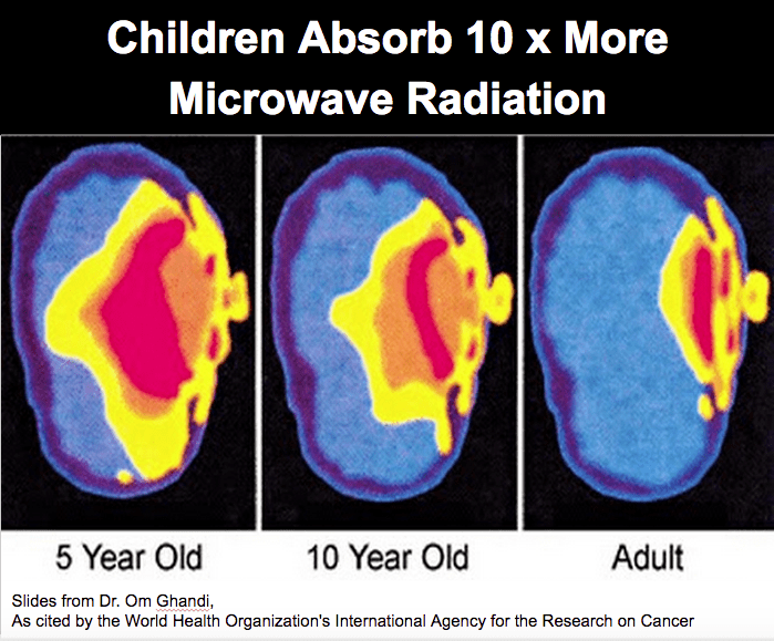 Snapshot from Research Showing Baby's Brain Absorption being 10 times adults.
